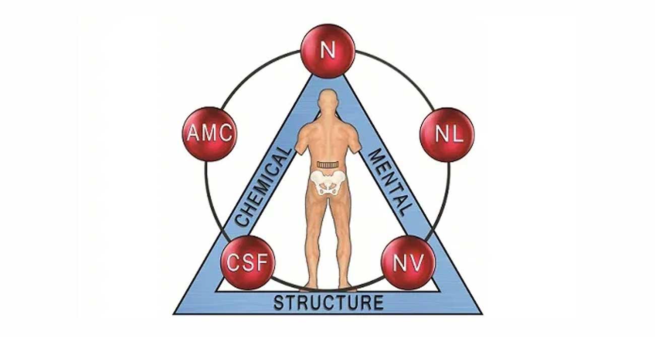 A kineziológia tudománya
