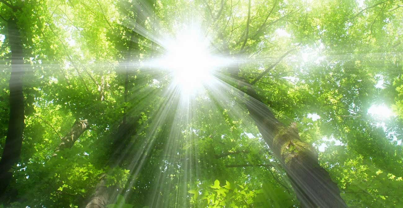 A nap fája és a nap fényében növekvő almafa